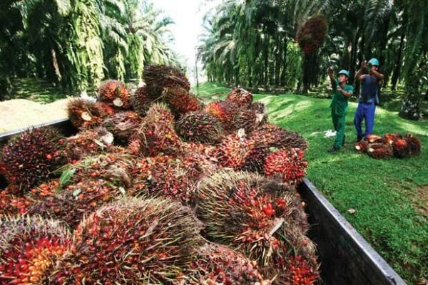 Peru wants to study Indonesia's palm oil development
